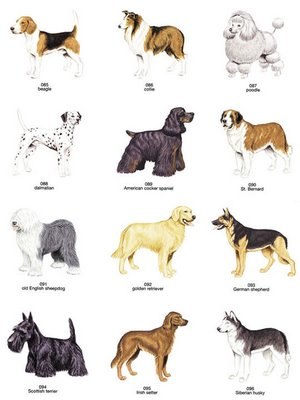 dogs breed pics. dog-reeds When you get a dog,
